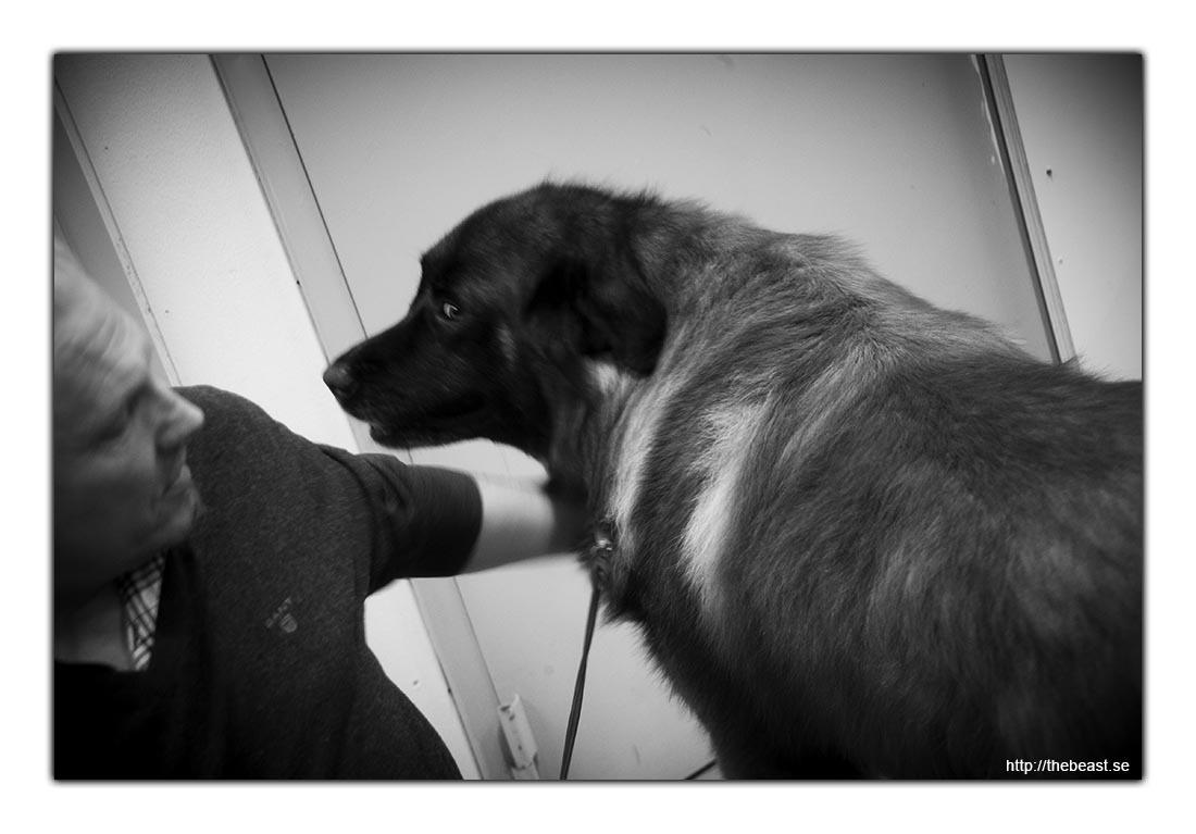 Hund med husse