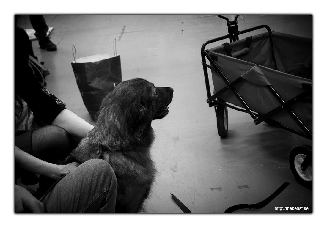 Hund i väntan