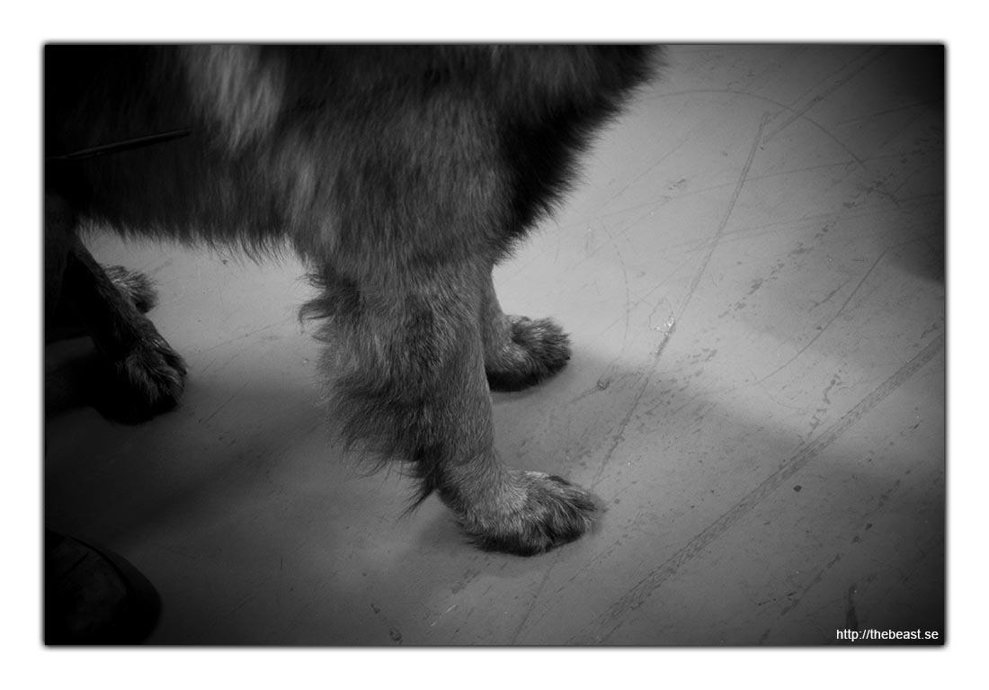 Kolla in benen
