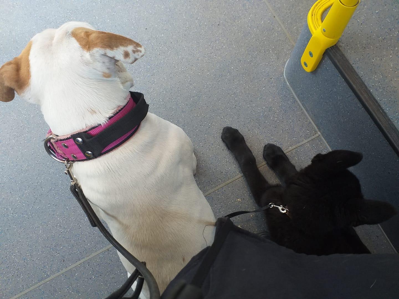 Boyo och Lilo på bussen, på väg mot vaccination av Boyo!